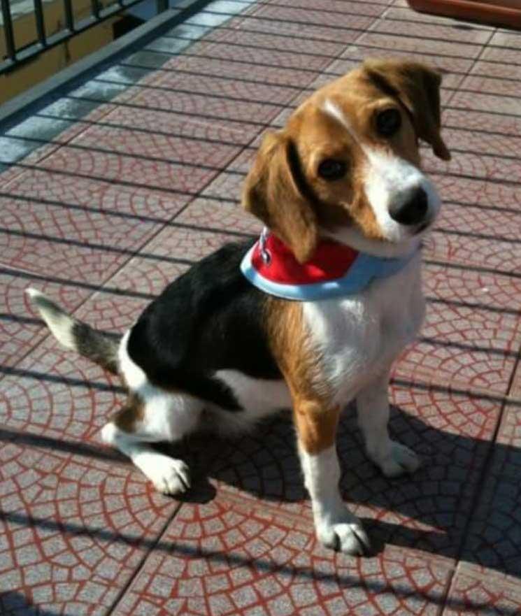 Berta posa per medagliette cani personalizzate