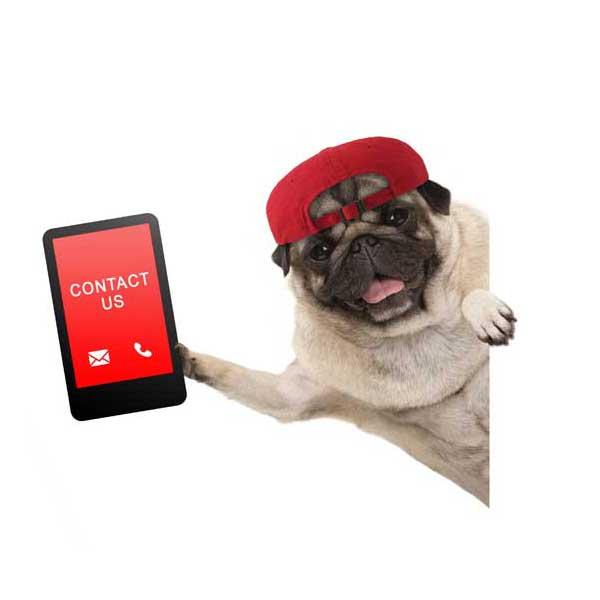 contatti-medaglietta-cane-con-telefono