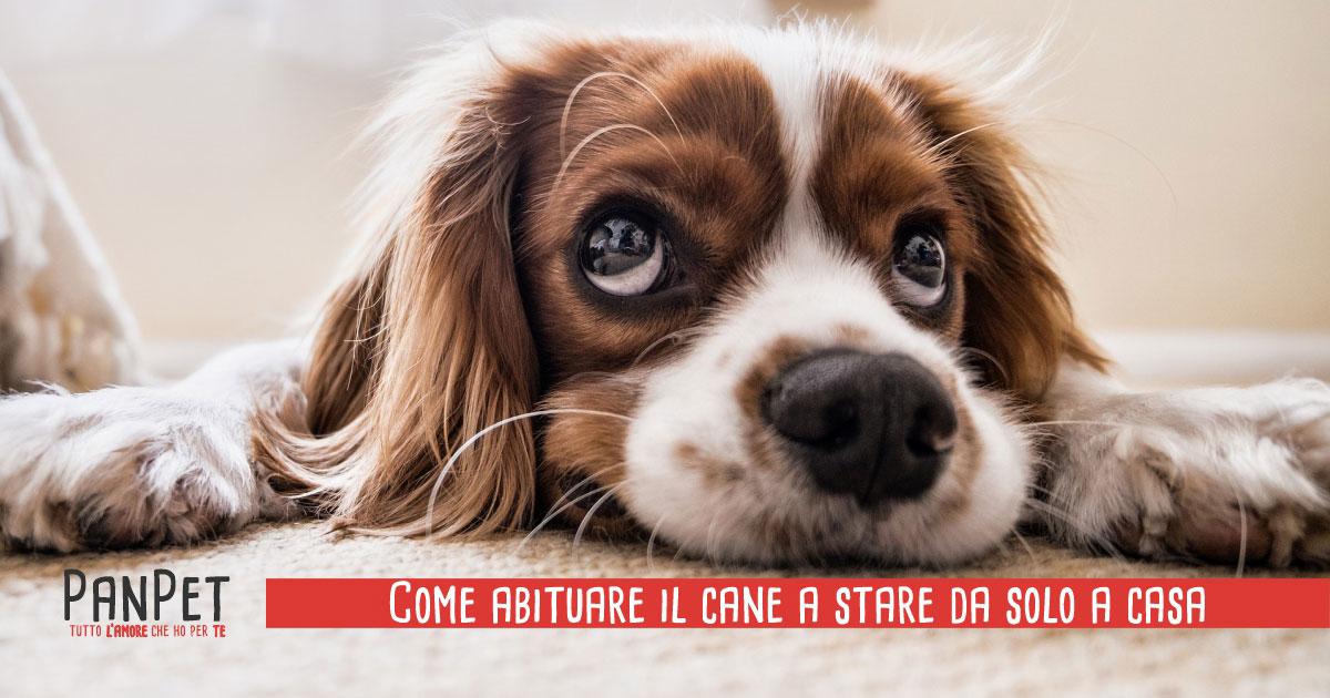 Come abituare il cane a stare da solo a casa
